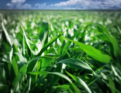 Cosa sono le biomasse vegetali